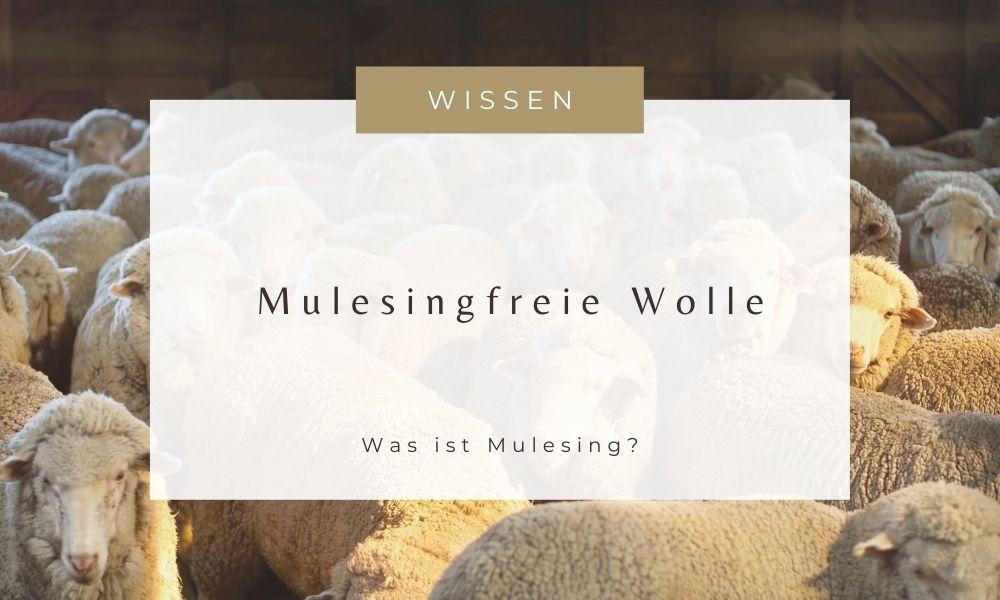 Wolle mulesingfrei